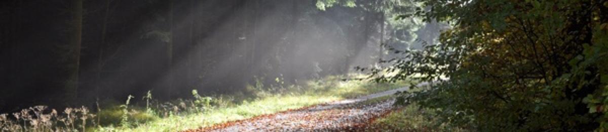 Forstwirtschaft_1200_262